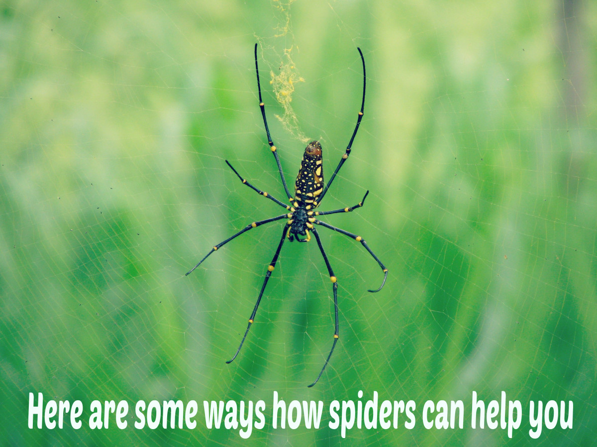 Lessons to learn from a spider