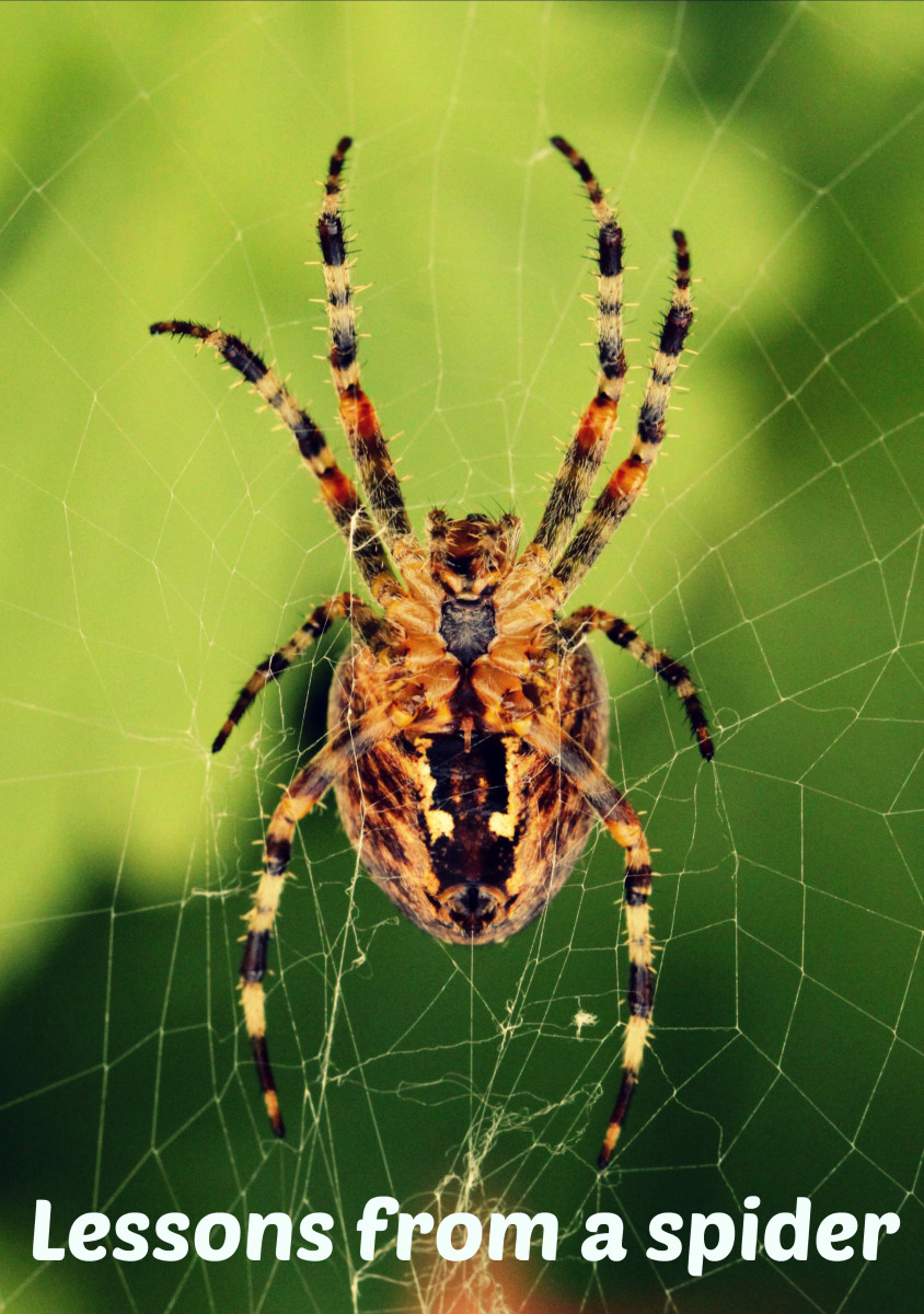 What to learn from spiders