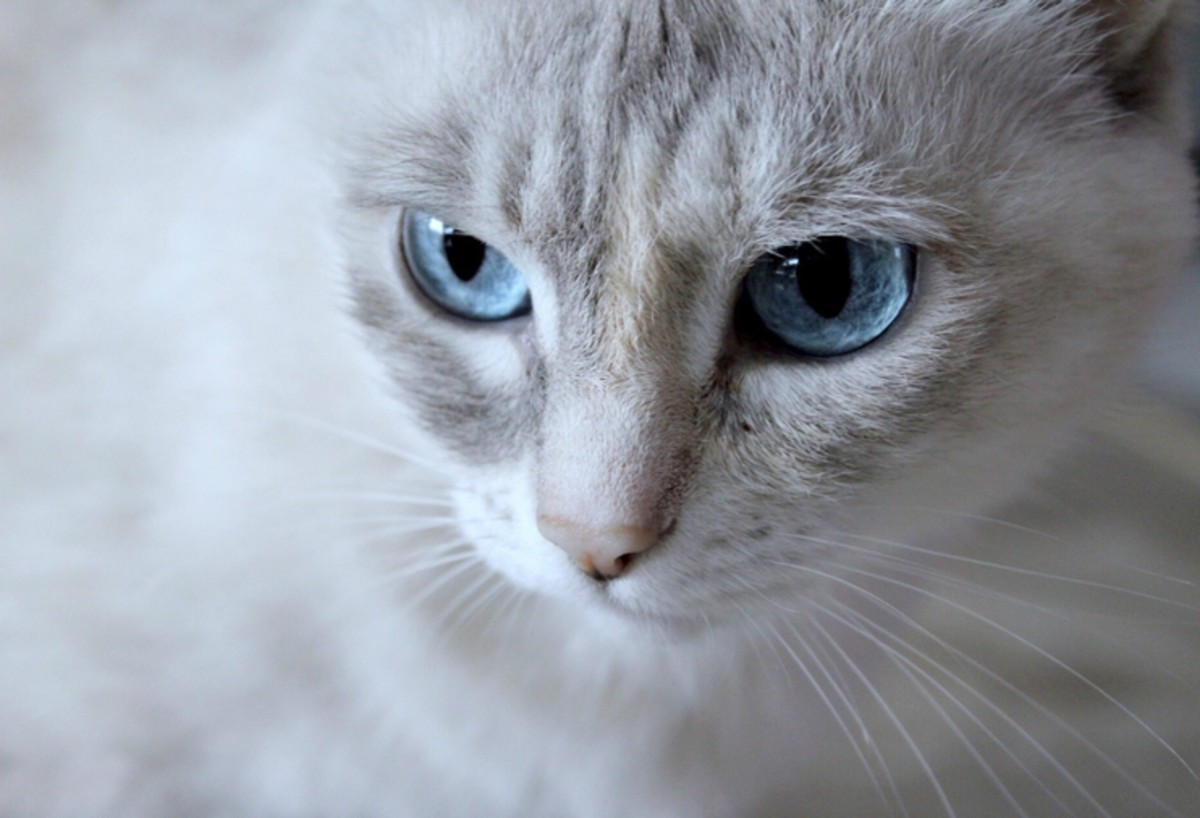Cat Names From Words Meaning Blue