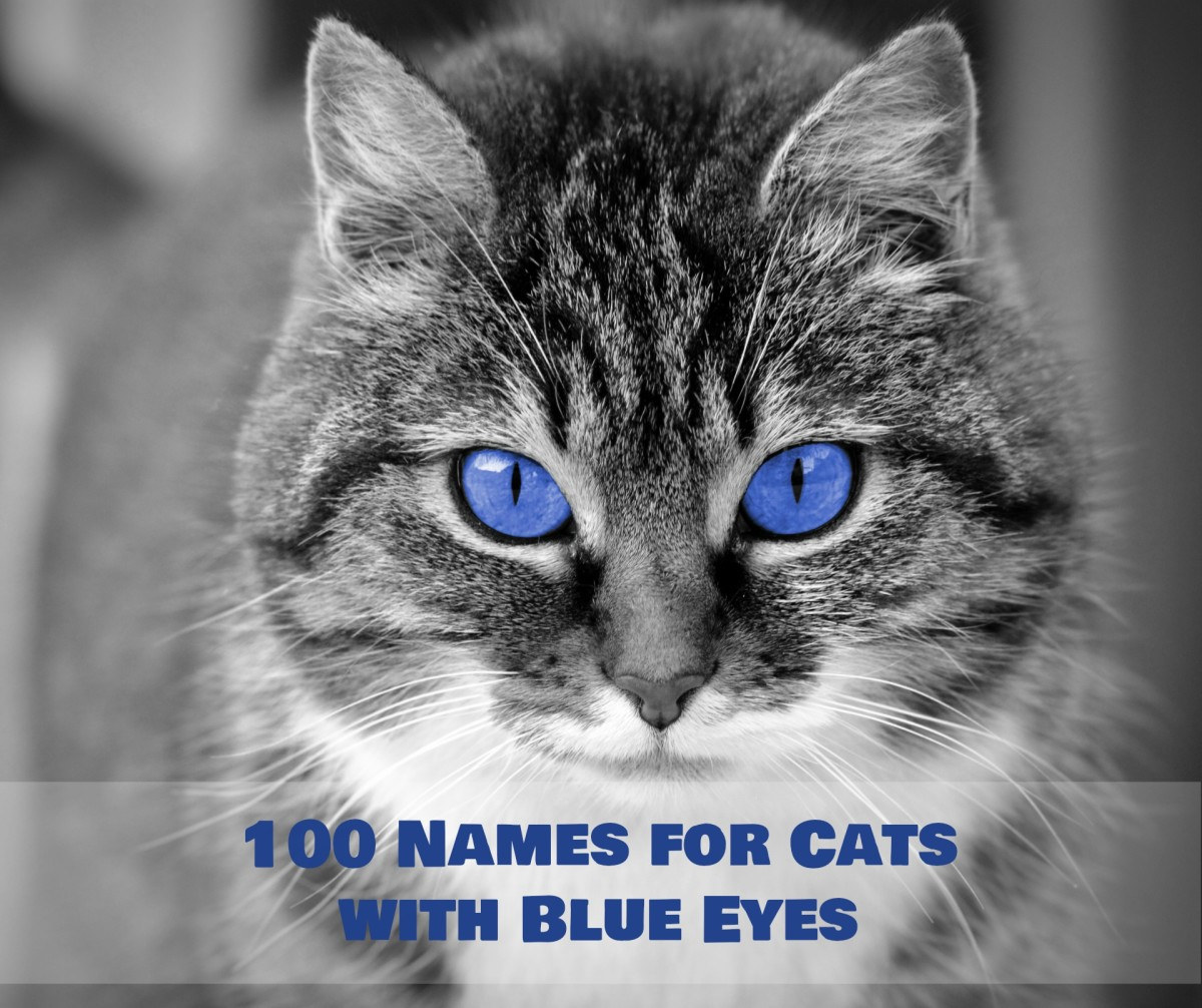 Unique Names for Cats with Blue Eyes