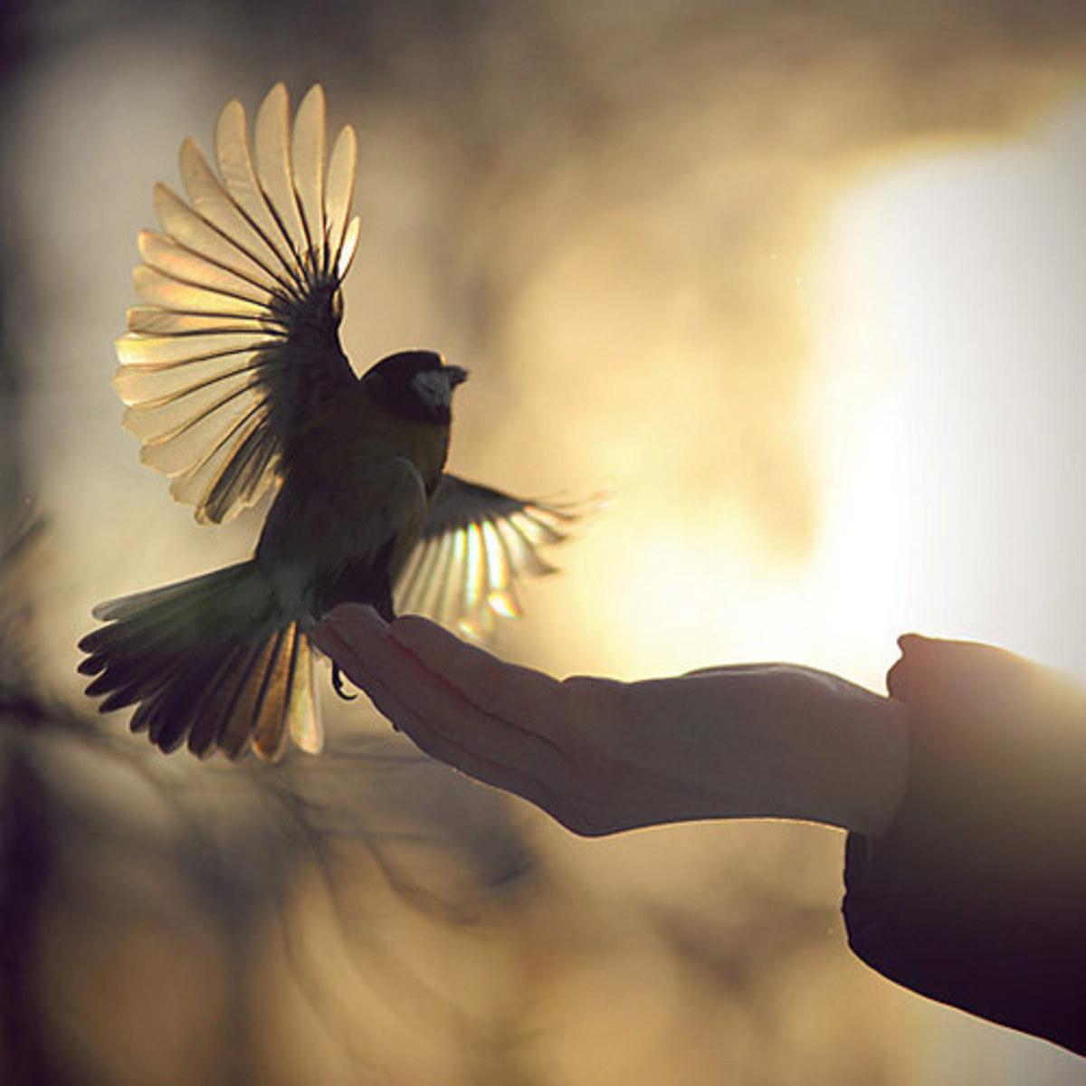 wings-a-poem