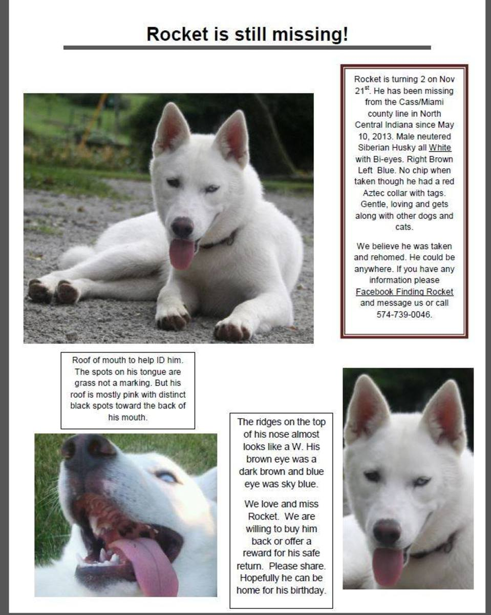 You can help find this beautiful neutered white male husky by spreading the word via this page and his Facebook Page! Social Media shares help!