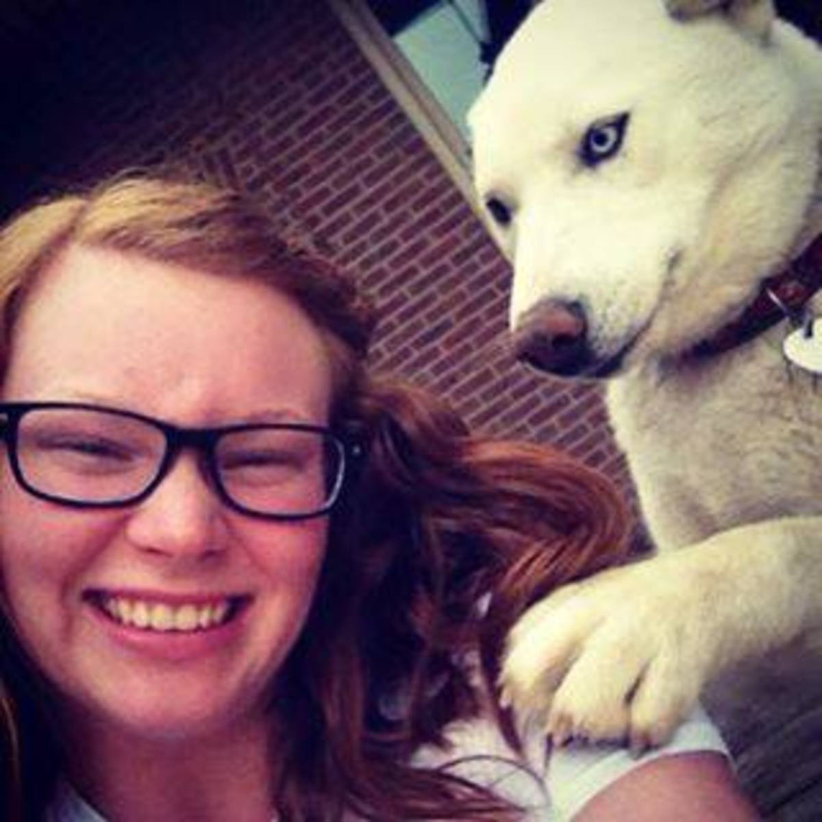 Rocket, an all-white bi-eyed male husky, really misses his family and wants to come home. Have you seen him?