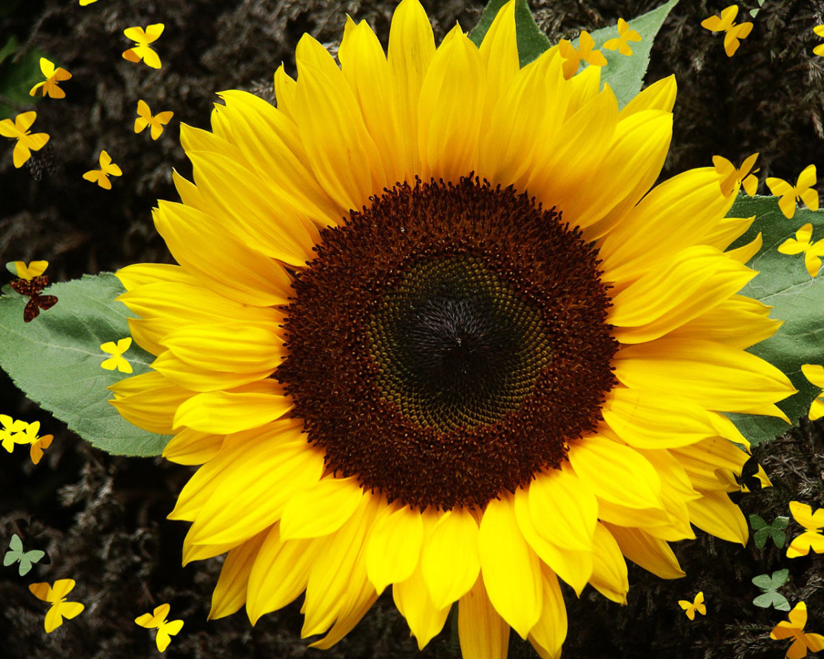 The sunflower is so named because its appearance is like the shape of a sun and is a popular subject in art due to its brightness and association with happiness.