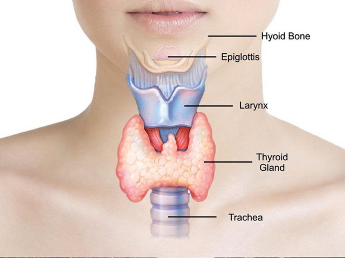 Your thyroid secretes hormones that affect all the bodily systems and functions to include metabolism.