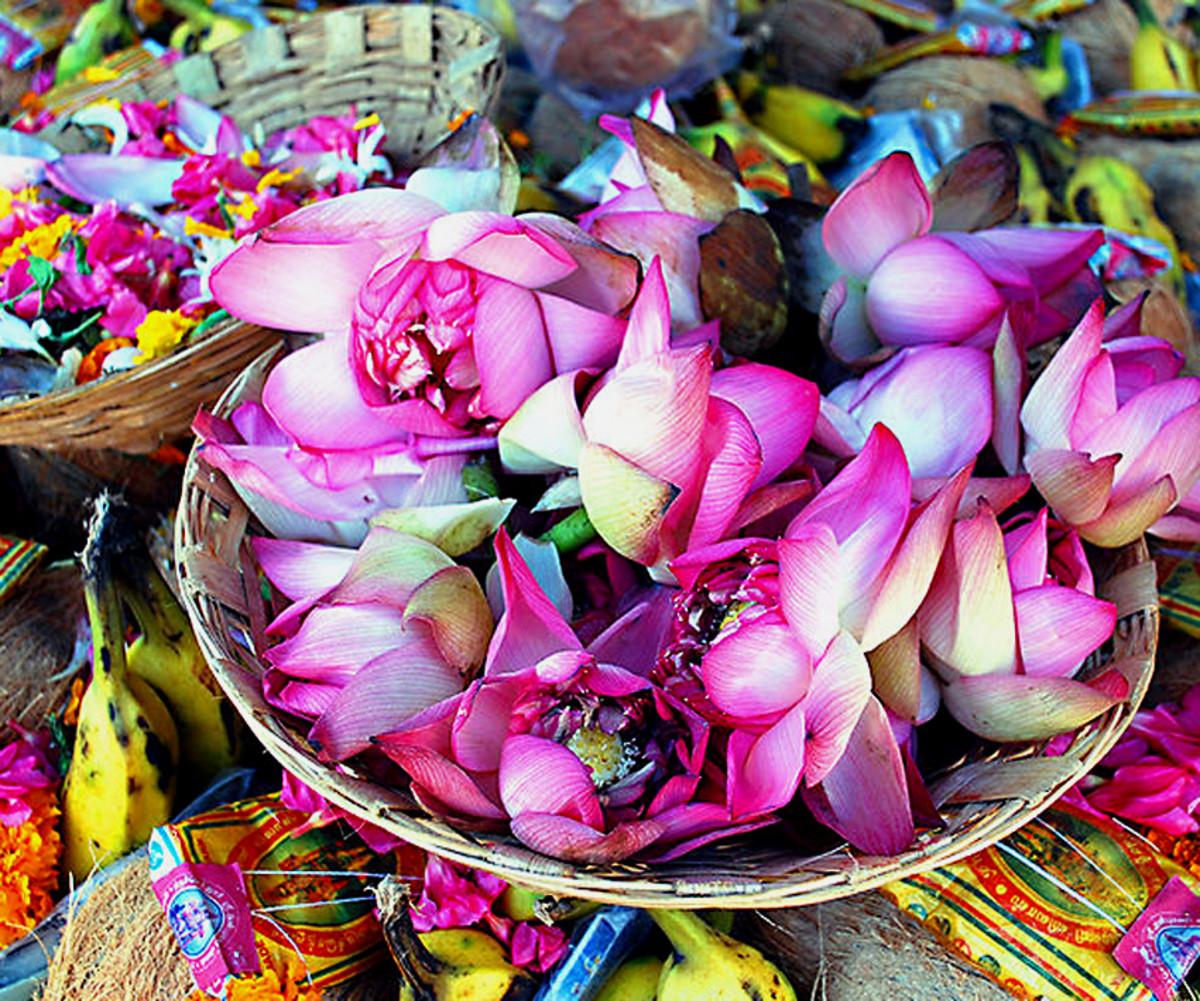 Lotus petals in Tamil Nadu, India