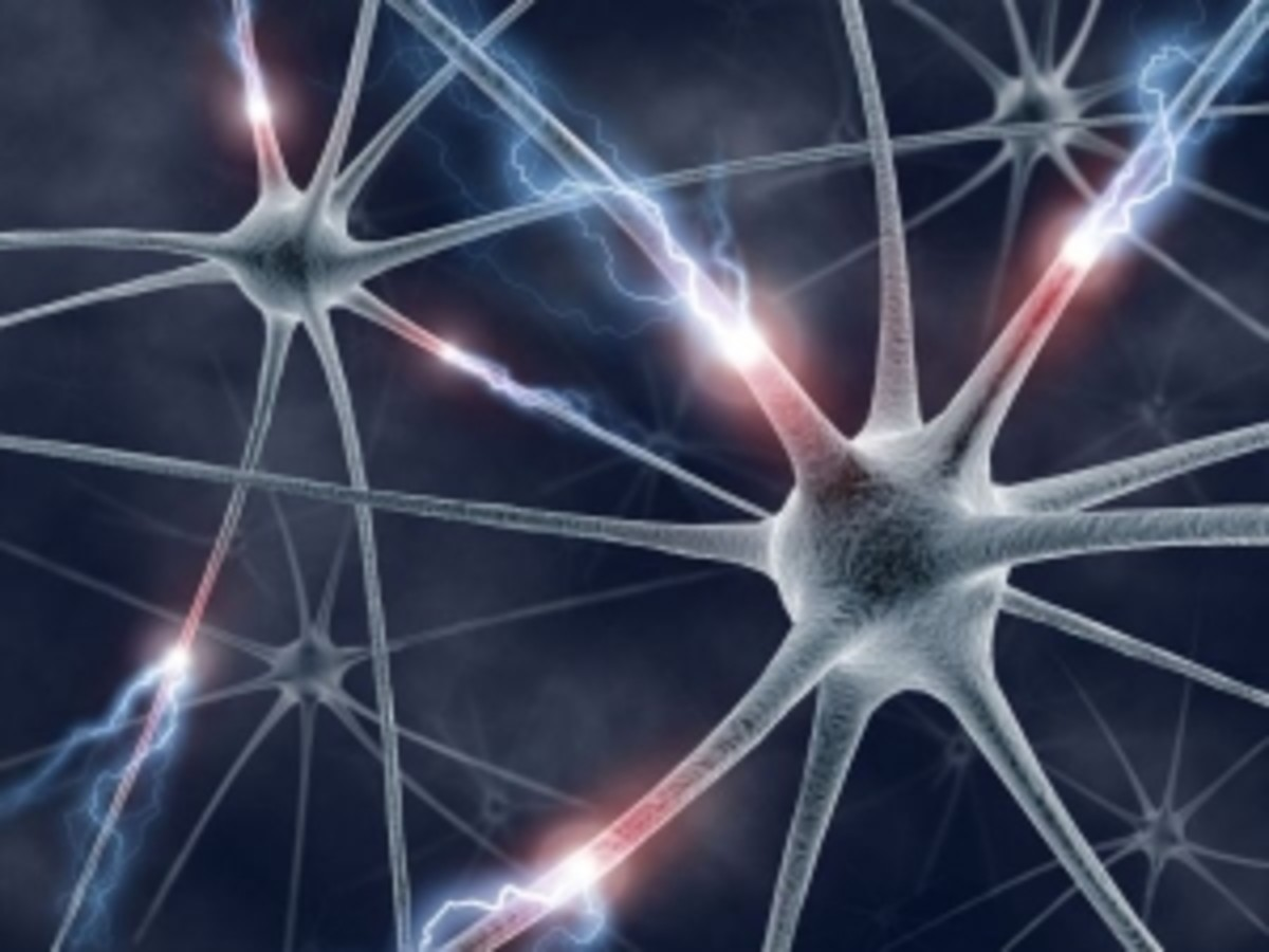A network of nerve cells.