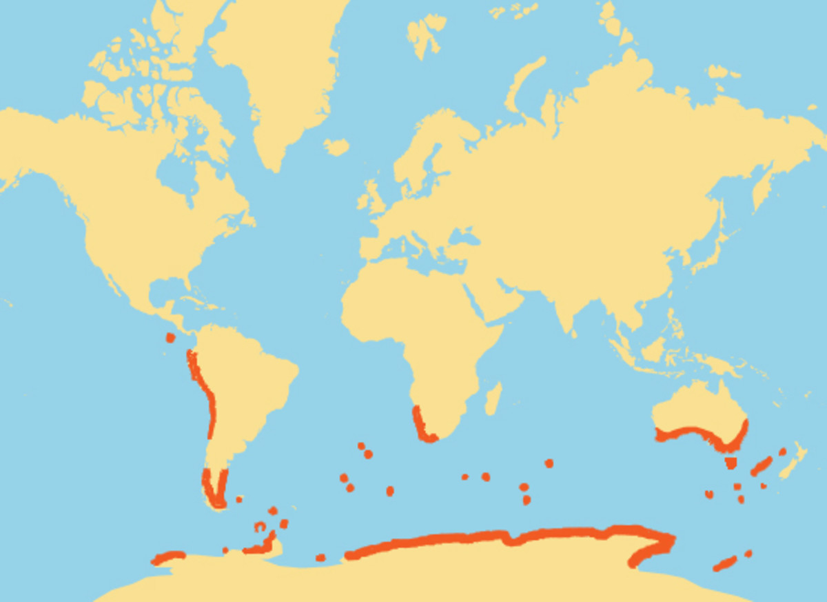 Penguin habitat map - photo#35