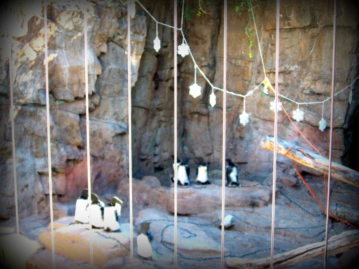 Fake penguins at Reid Park Zoo, Tucson, 2012