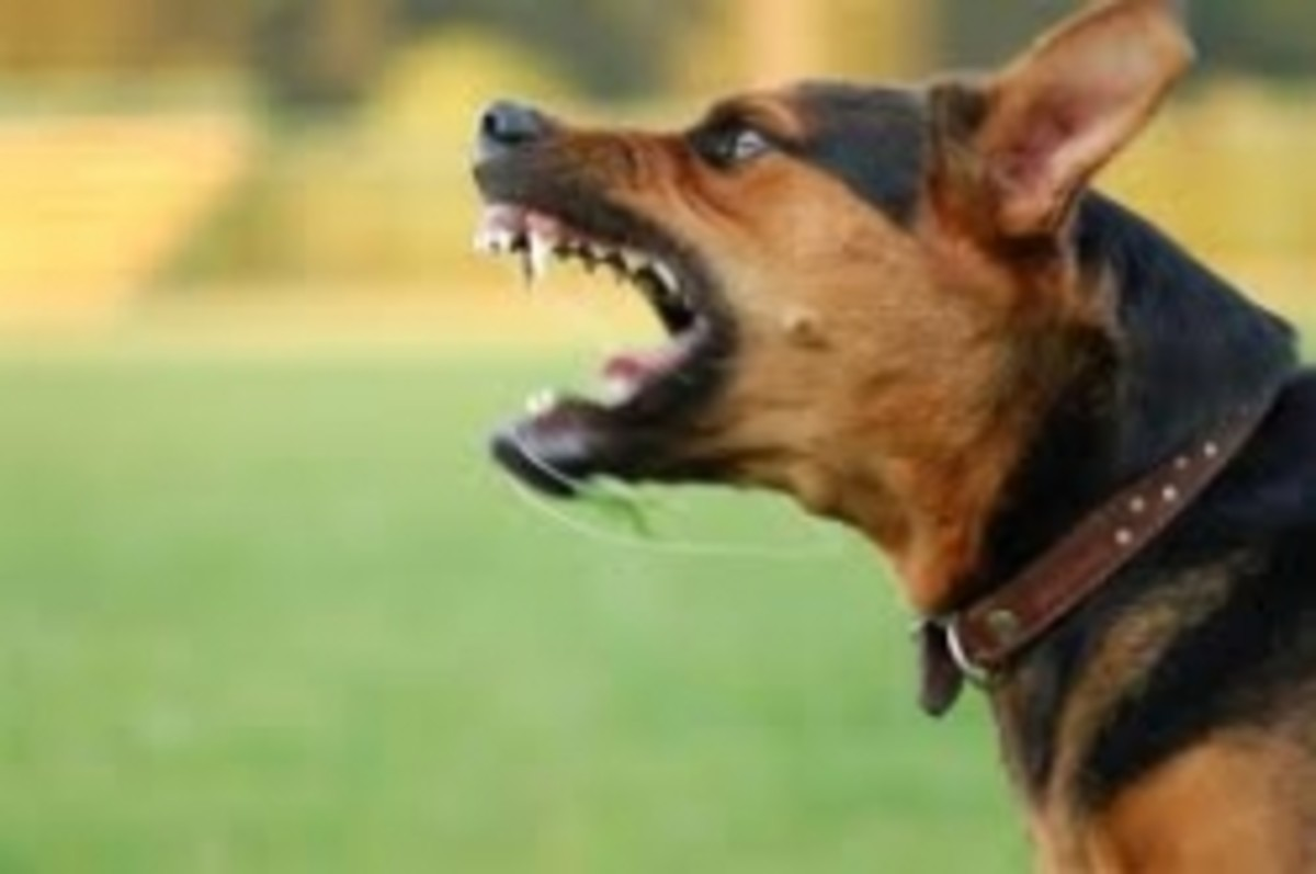Dangerous and Vicious Large Dog Breeds