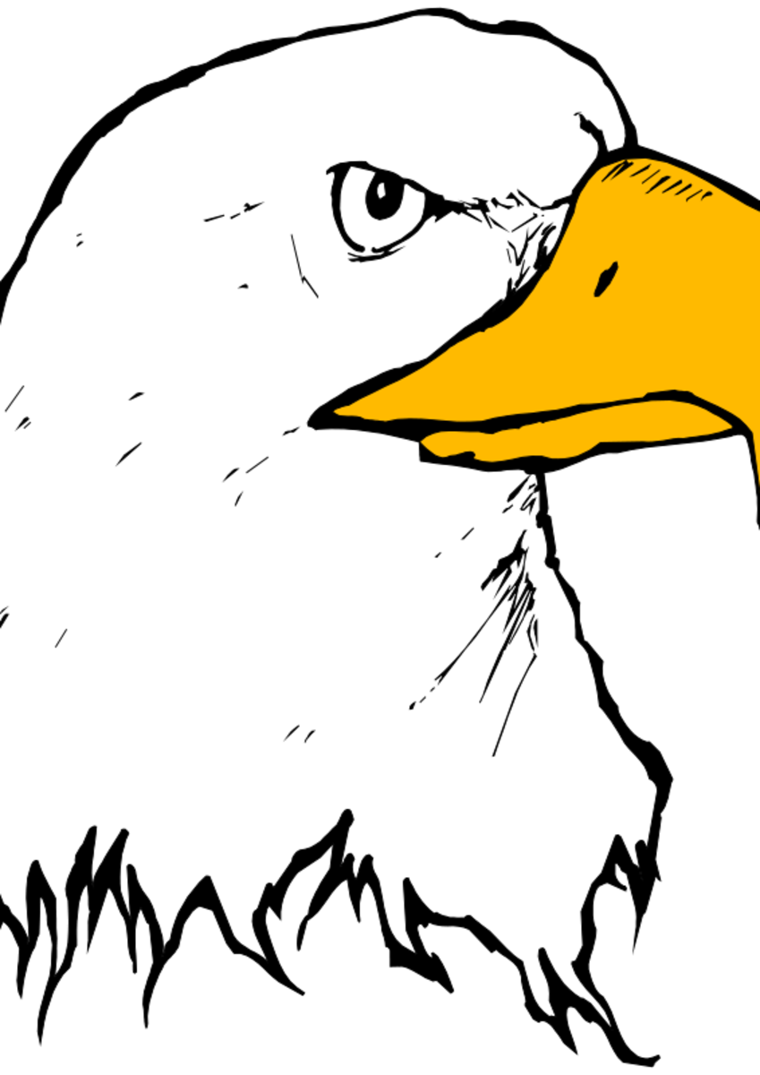Eagle with yellow beak clip art