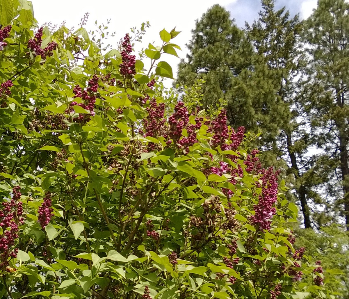 Plant shrubs in front of your home to create a natural weather barrier