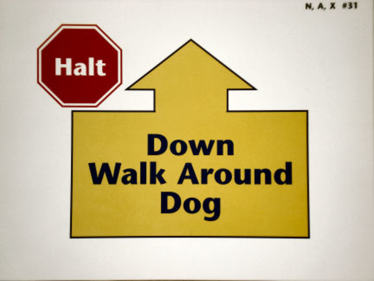 "Every time you see a ""Halt"" in a red octagon, your dog must sit!"
