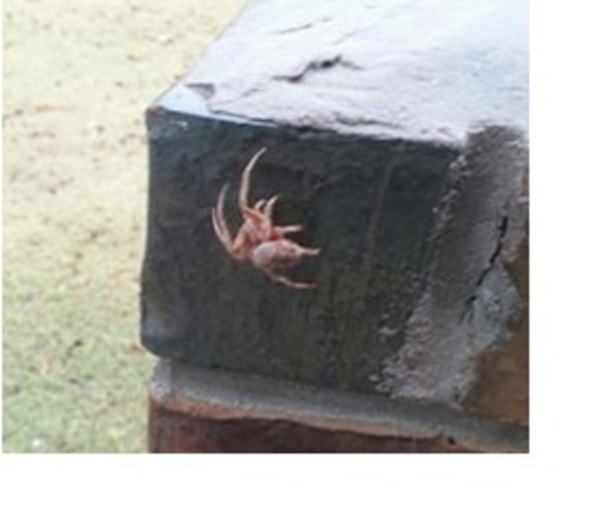 Kay in Oklahoma saw this miscellaneous mailbox marauder crawling on a mailbox.  She said it creeped her out.  Really?