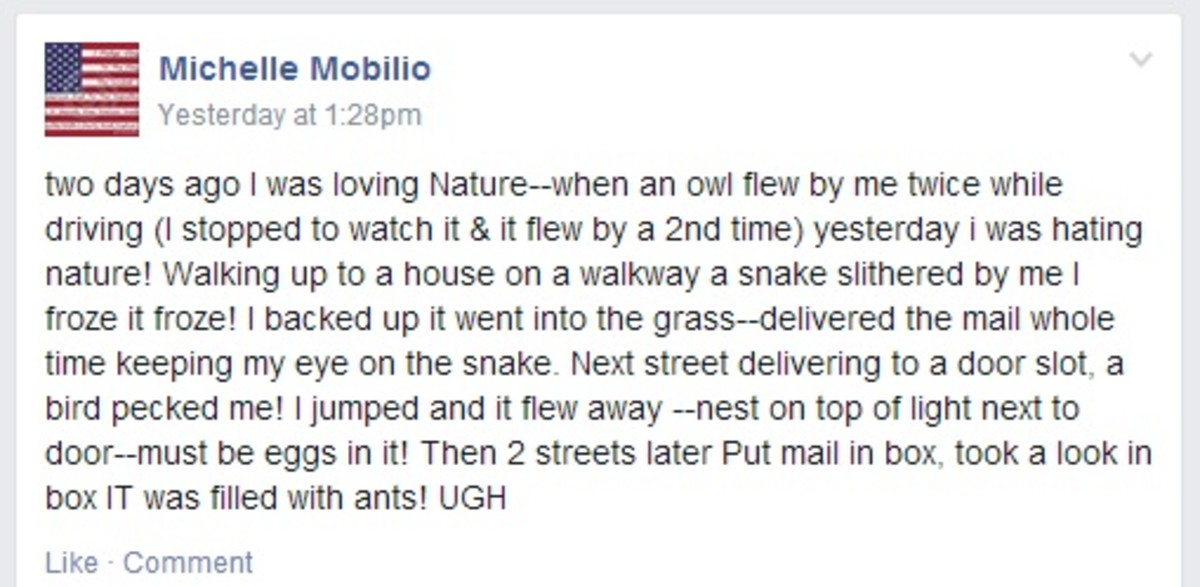 whats-in-your-mailbox-mailbox-infestations-and-more-creepy-crawlies
