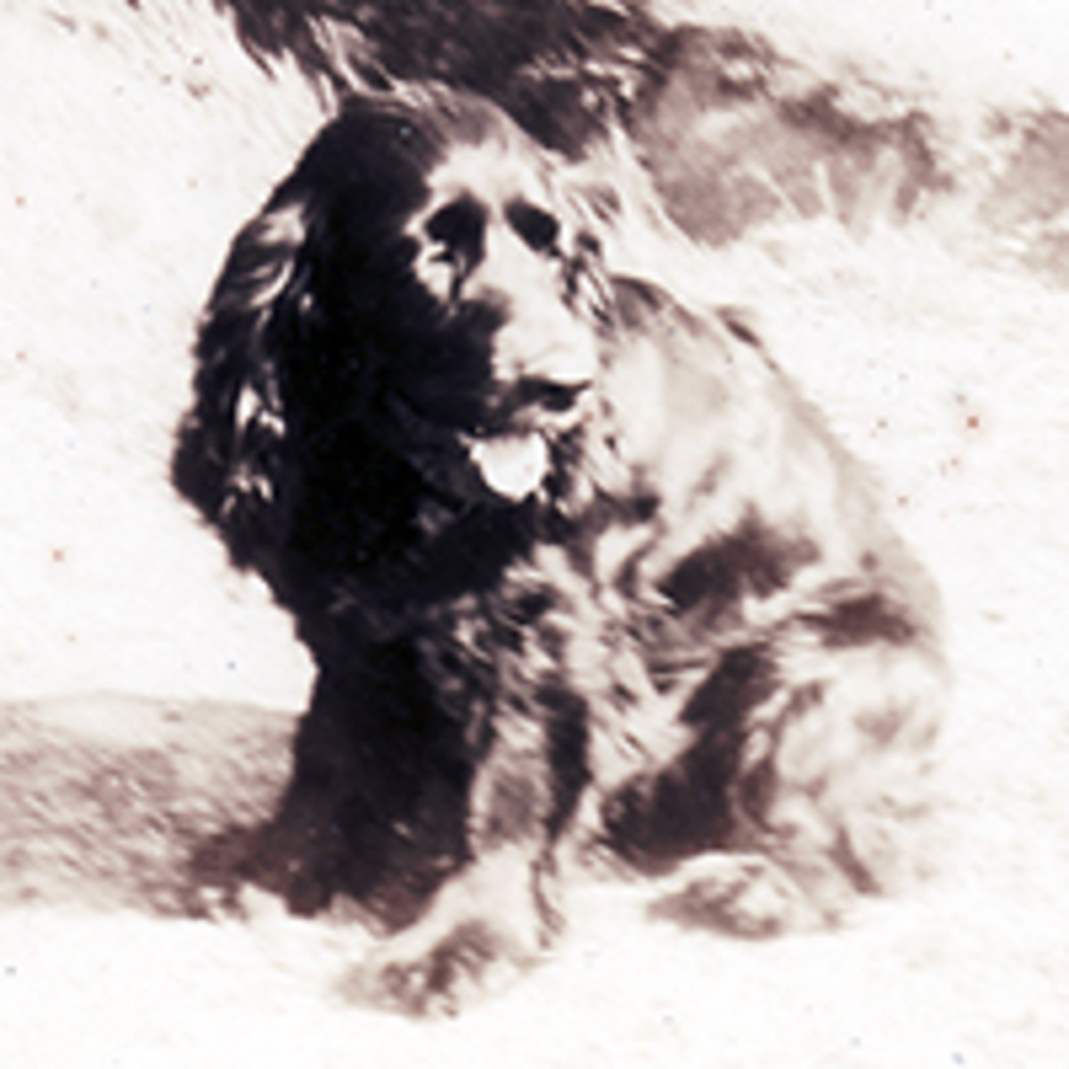 "The company mascot owned by the Co-Pilot 2nd Lt.  Quentin Bowerman.  Named ""Sir Flaps"""