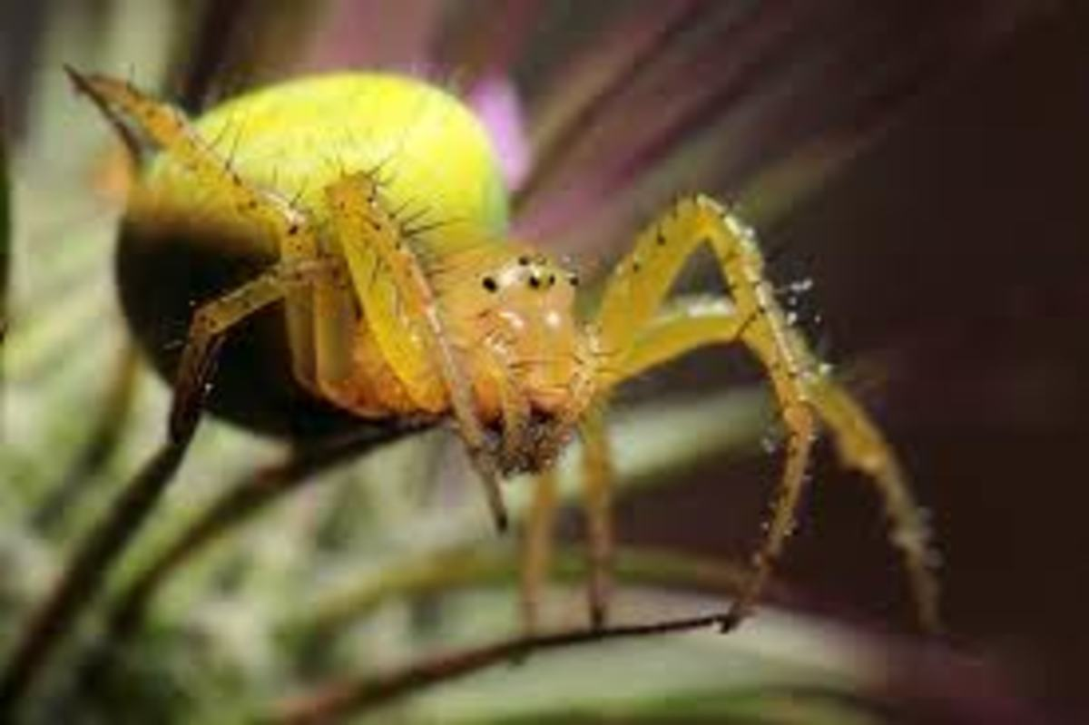 vietnam-poisonous-snakes-and-venomous-spiders-and-other-dangerous-animals-and-insects