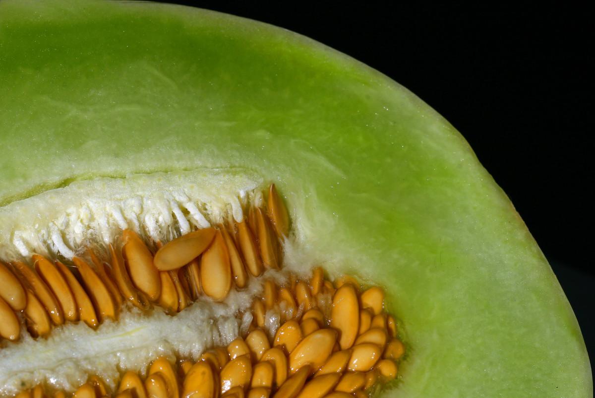 Melon seeds (Sem. Cucumis L.)