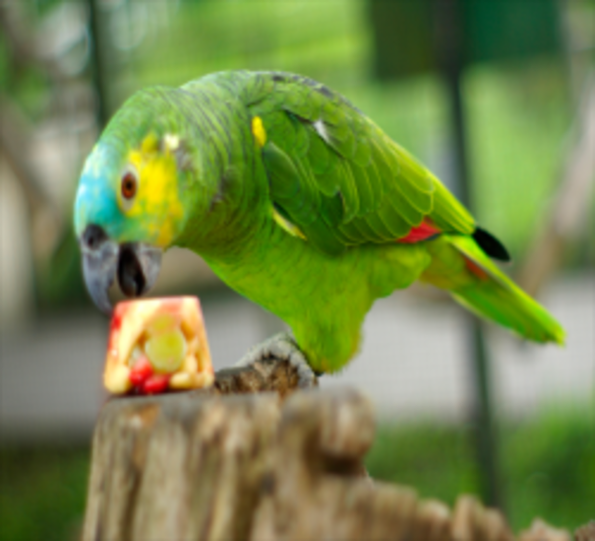10 tasty and healthy treats for pet birds