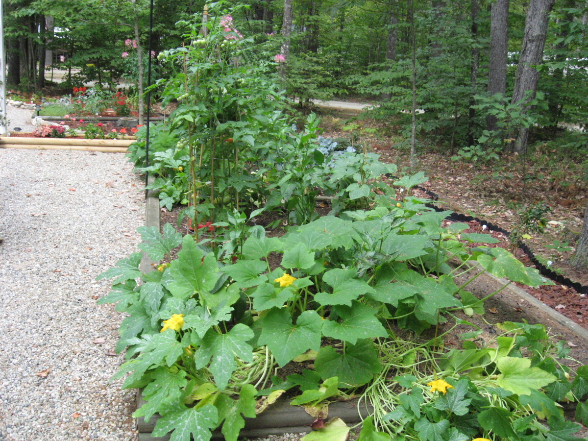 My New Hampshire vegetable garden. Doesn't it look great? You can see why it upset me when moles started tunneling here.