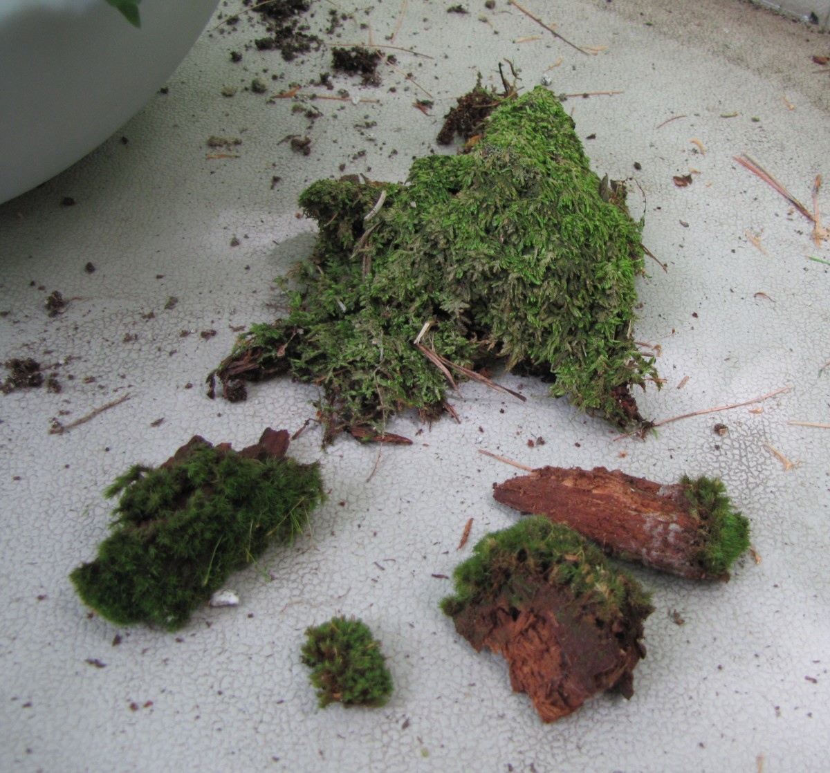 I have a shady yard, so I was able to gather this moss from the base of some trees.