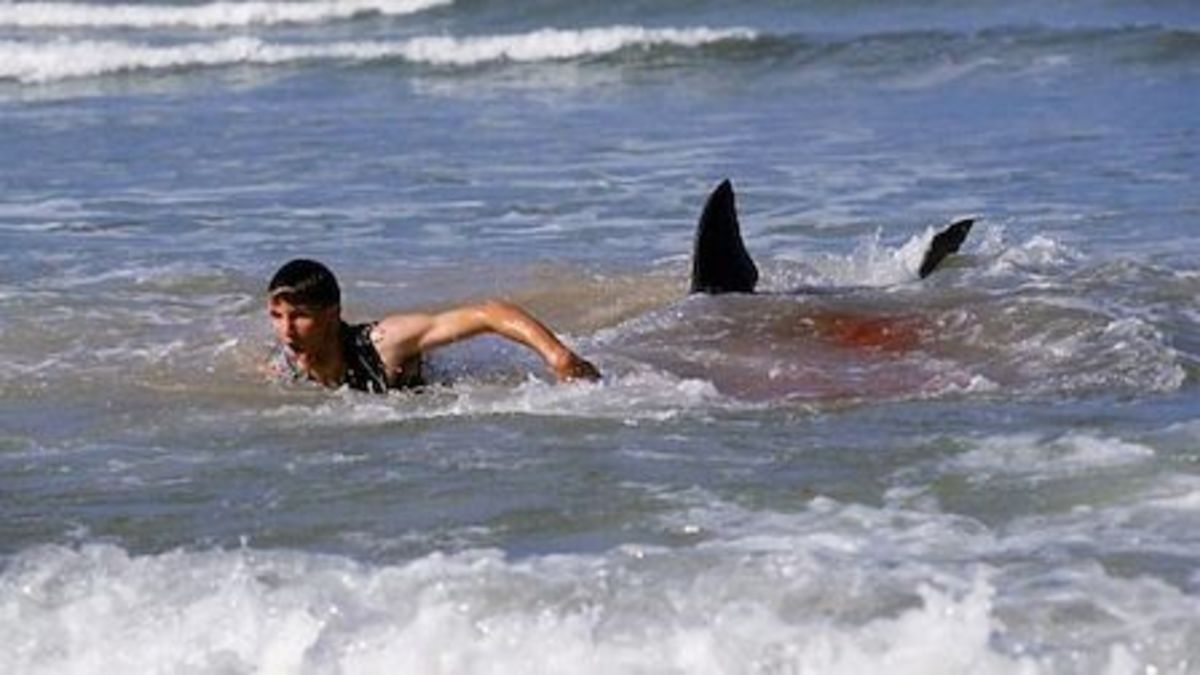 New Jersey Shark Attacks of 1916