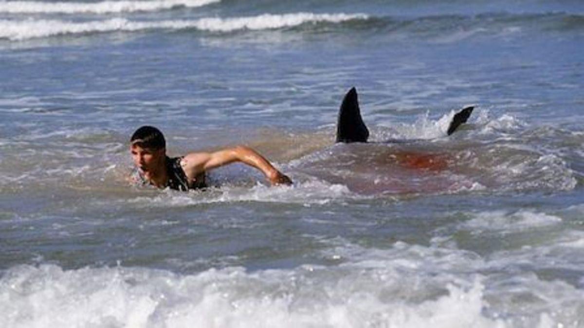new-jersey-shark-attacks-of-1916