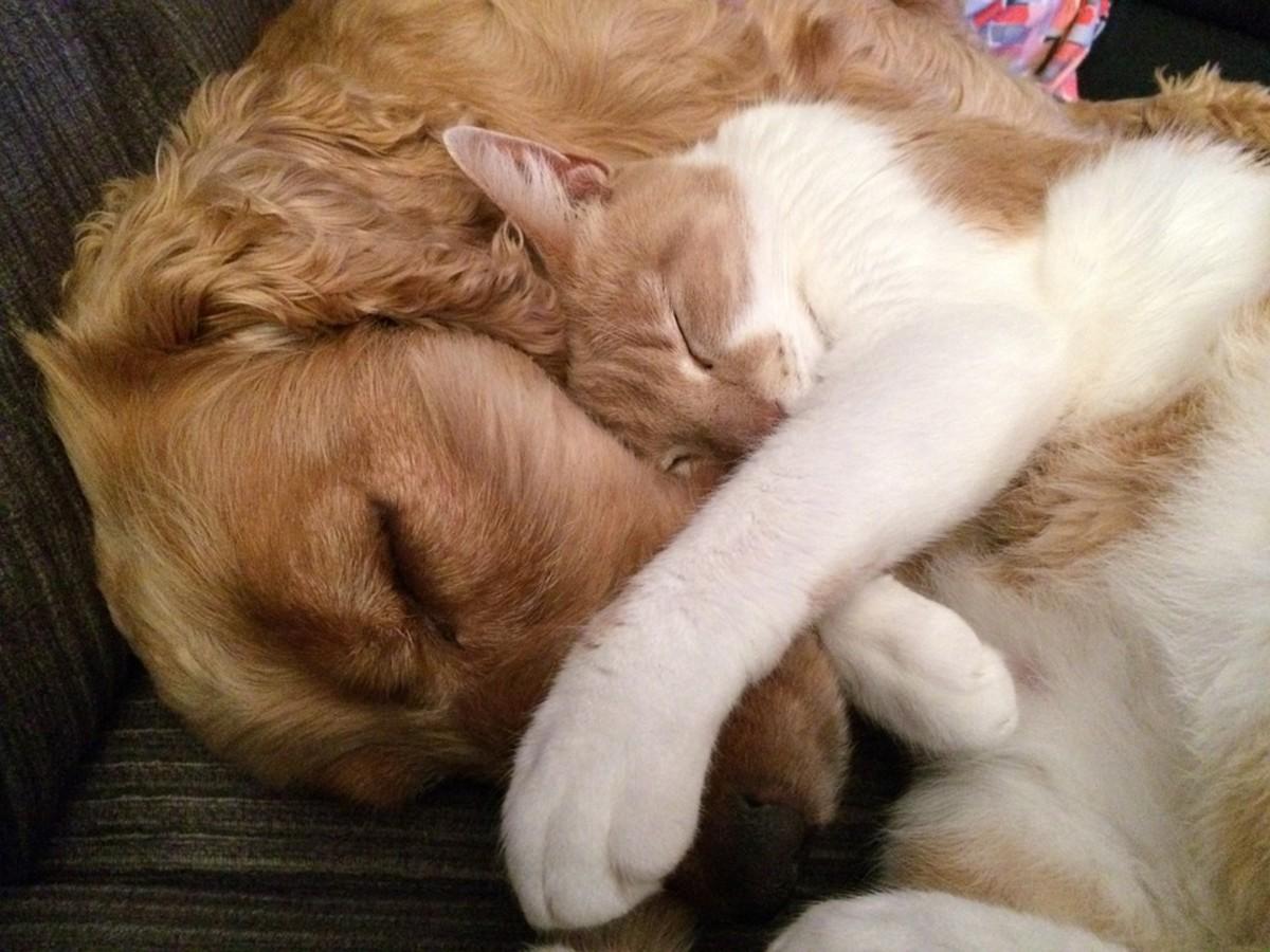 Cat cuddles up to Rex.