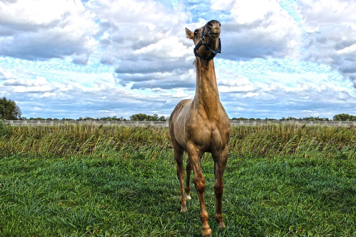 Horses use their sense of smell to help