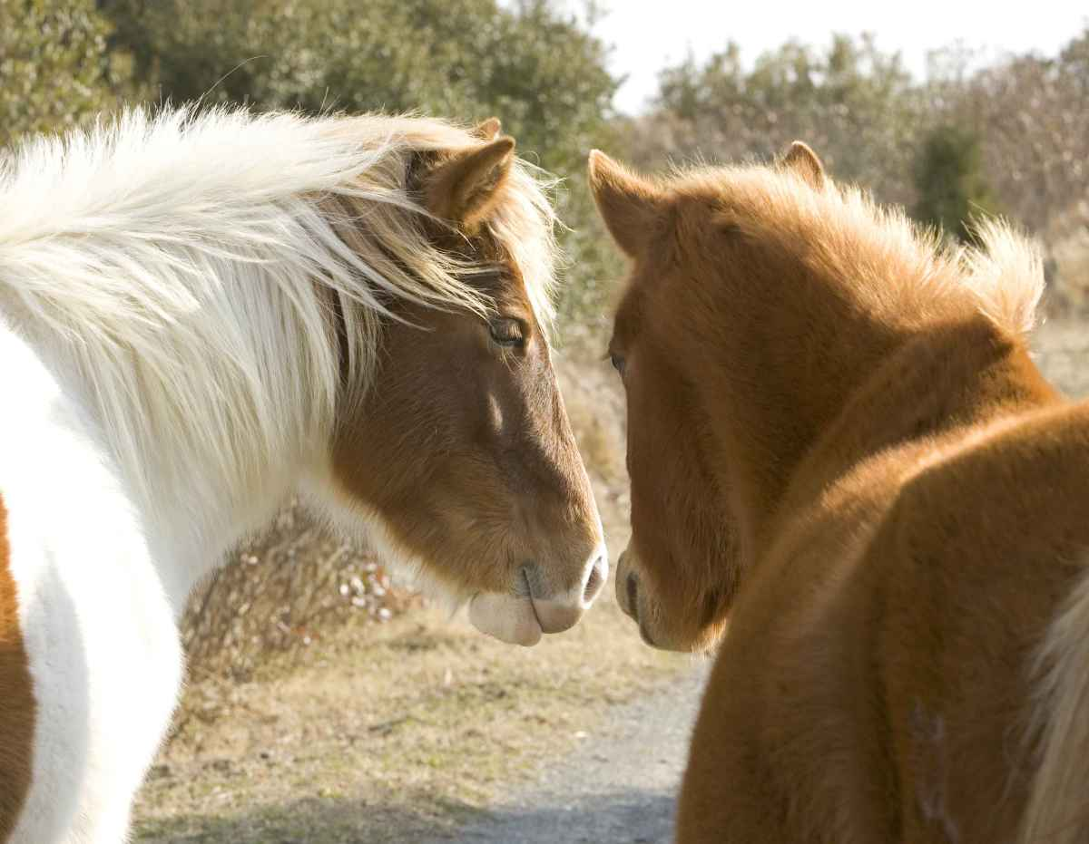 Horses are very social animals