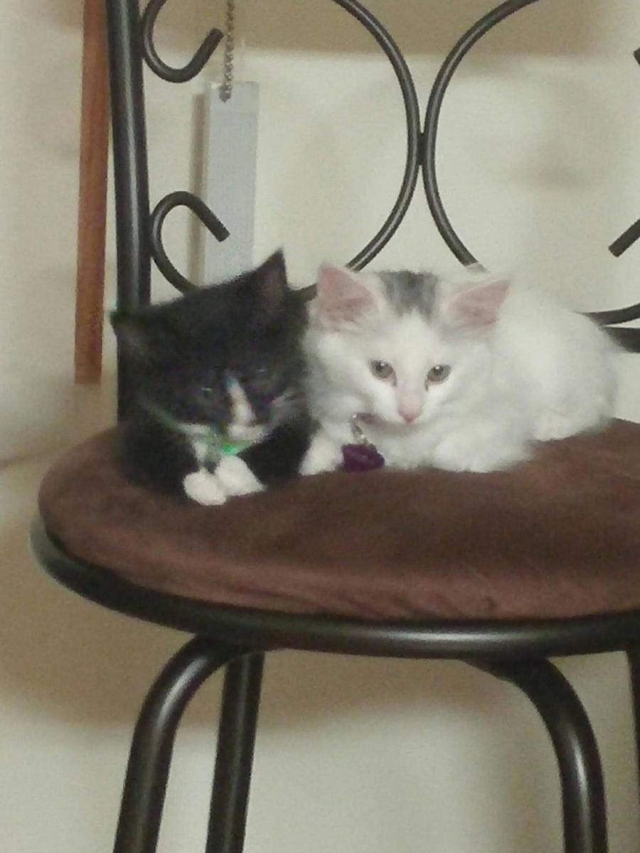 Our munchkin, Diego (left) with his sister Frida