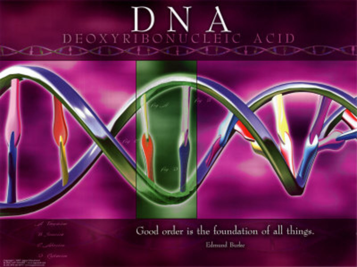 The Replication of DNA: The DNA replication process and Genetic Disorders