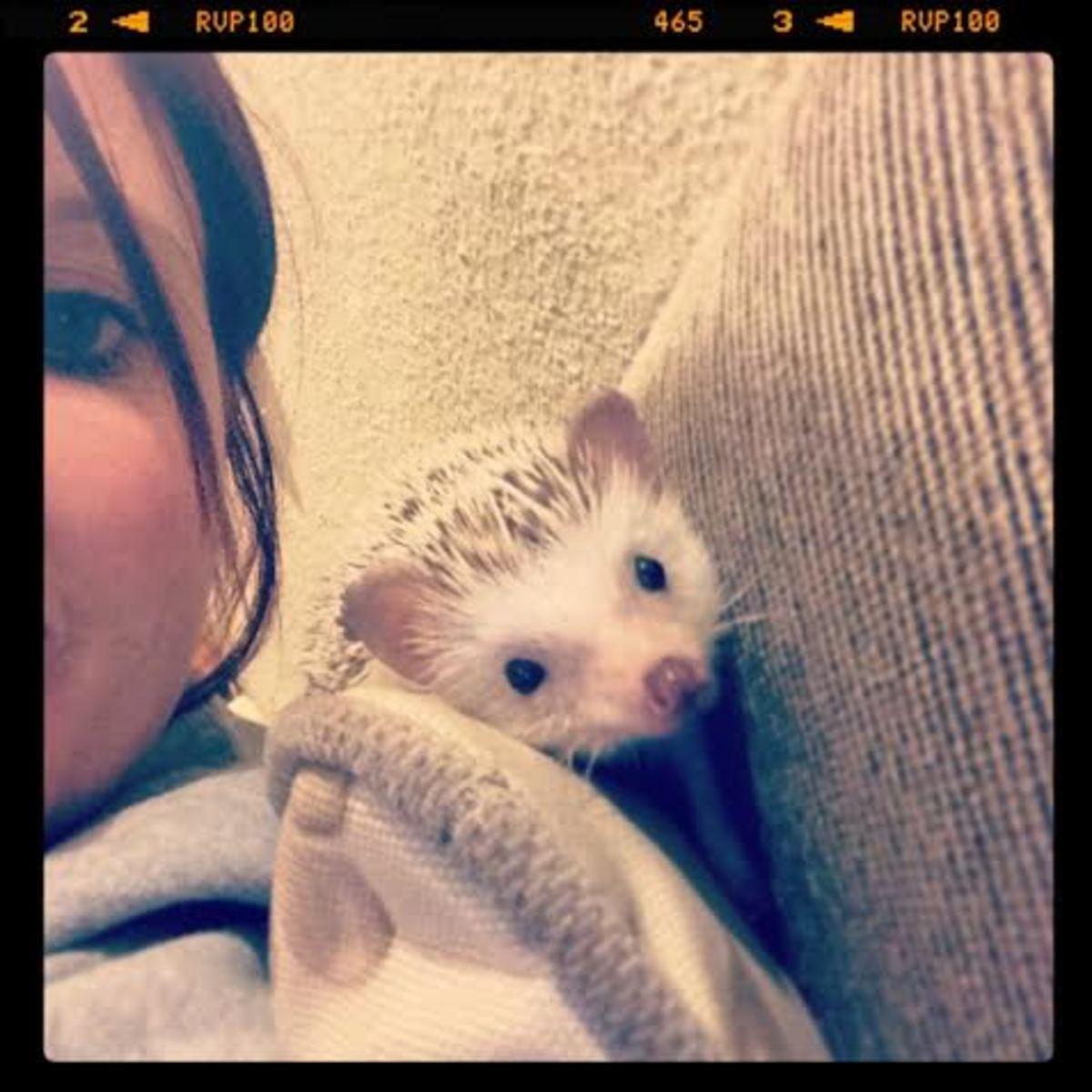 My happy Hedgehog playing in my hoodie