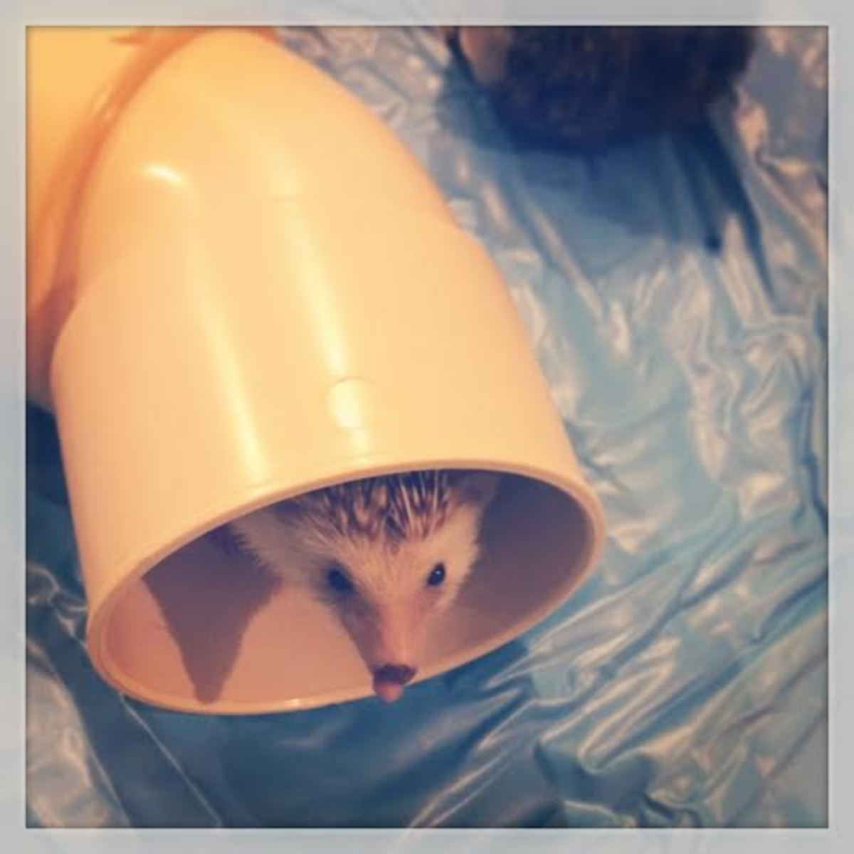 Rocher Hage poking his head out of his plumbing tube