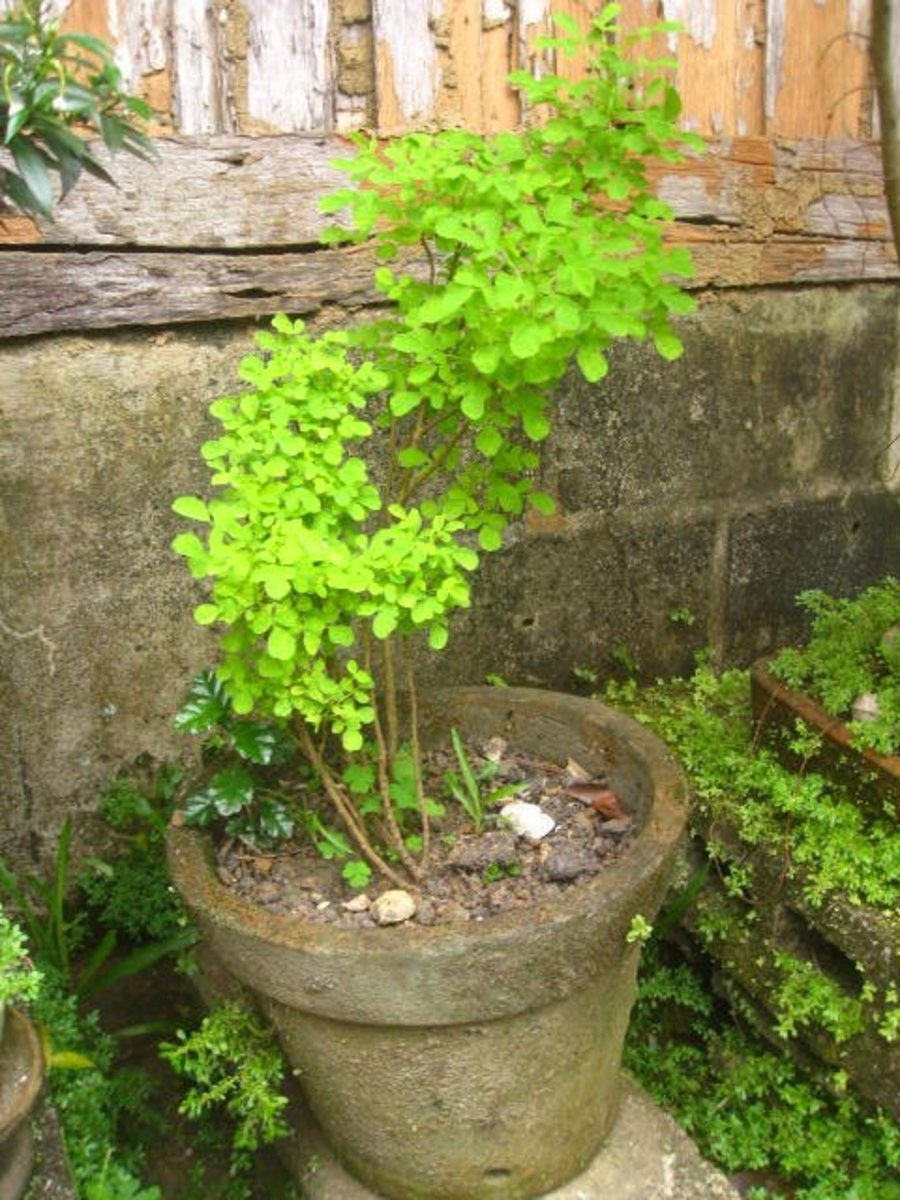 why-shift-to-planting-ornamental-plants