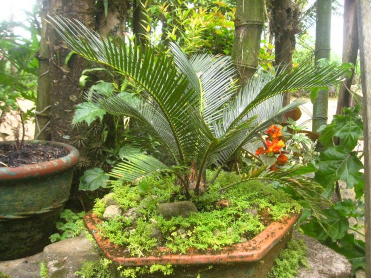 A Hobby That Extends Life, Planting Ornamental Plants