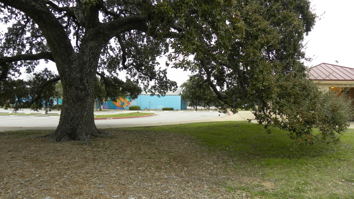 Shade trees  Dick Nichols Park Austin TX