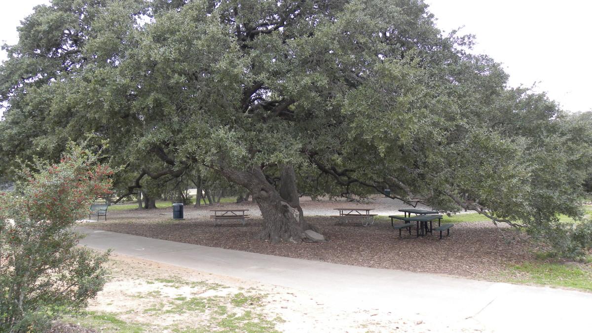 Tree shaded picnic areas  Dick Nichols Park Austin TX