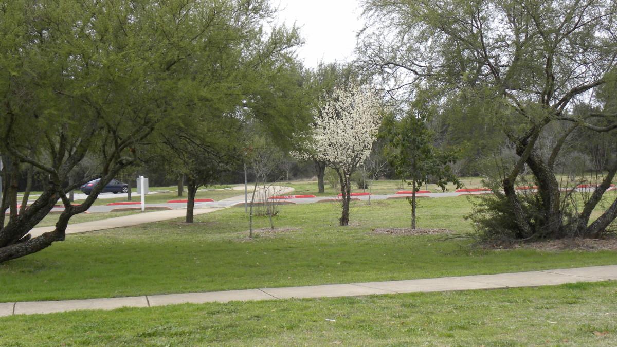 Dick Nichols Park Austin TX