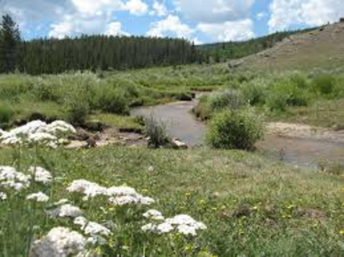 Beautiful Black Hills
