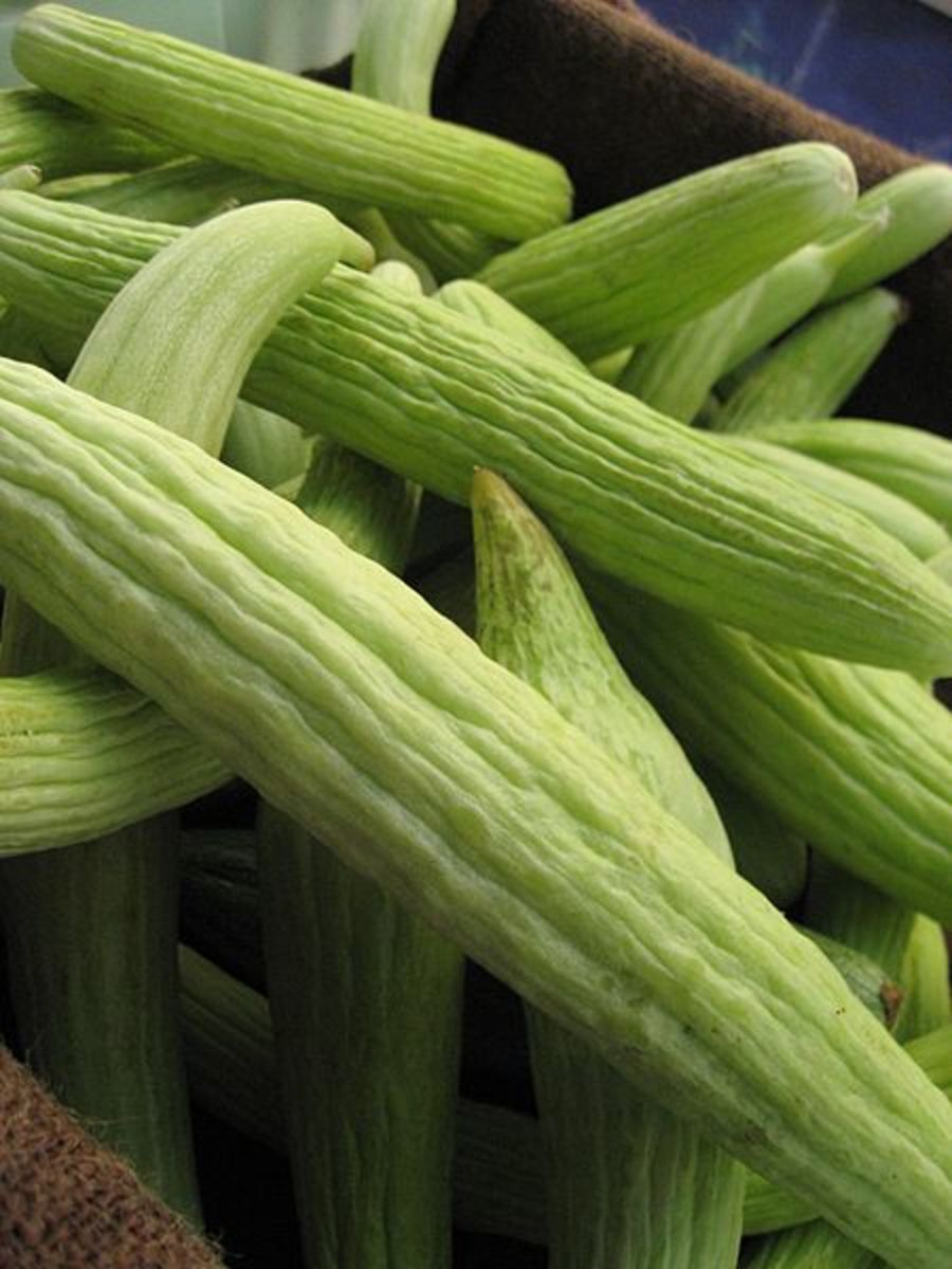 Armenian Cucumber or Snake Melon