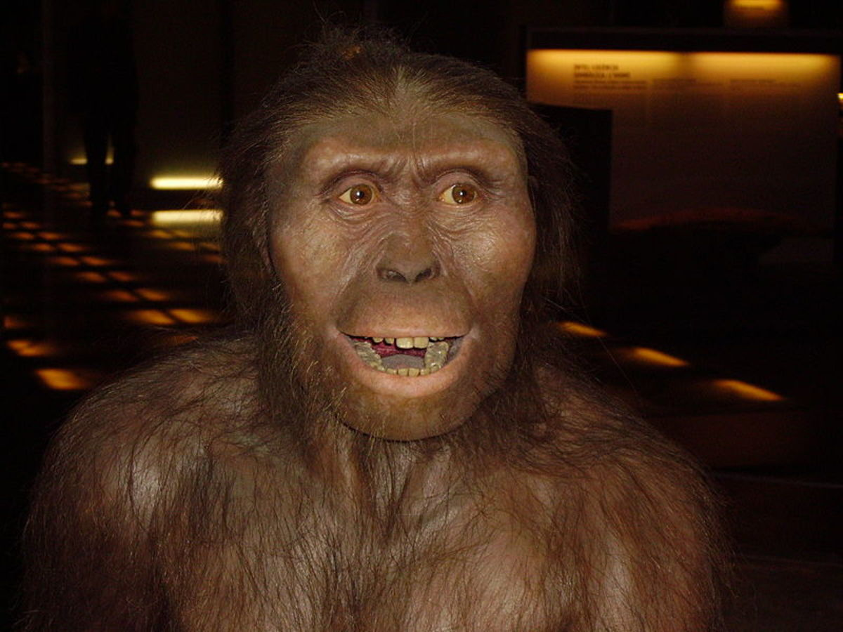 This is a modern reconstruction of an Australopithecus.  It is based off of Lucy, the oldest, best preserved hominid skeleton found to date.