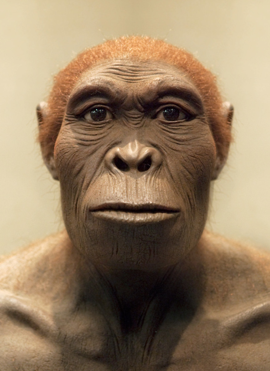 This is a modern reconstruction of what a Homo habilis may have looked like.