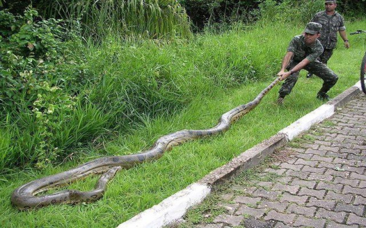 China, Venomous Snakes in Bejing, Hong Kong, Shanghai, and Rural Areas