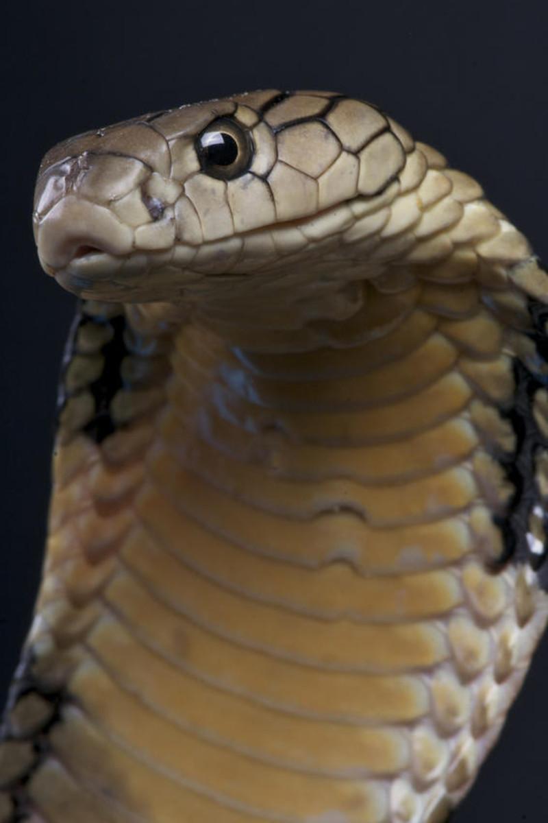 china-venoumous-snakes-in-bejing-hong-kong-shanghai-and-rural-areas