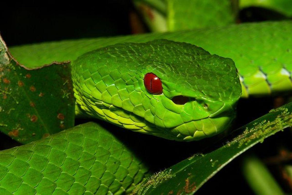 China, Venomous Snakes in Bejing, Hong Kong, Shanghai, and Rural ...