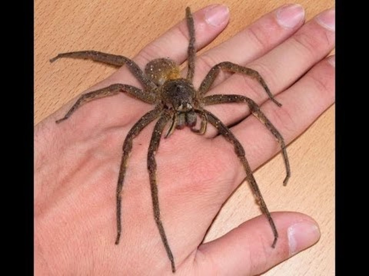 japan-venomous-snakes-poisonous-spiders-and-deadly-bugs-and-insects