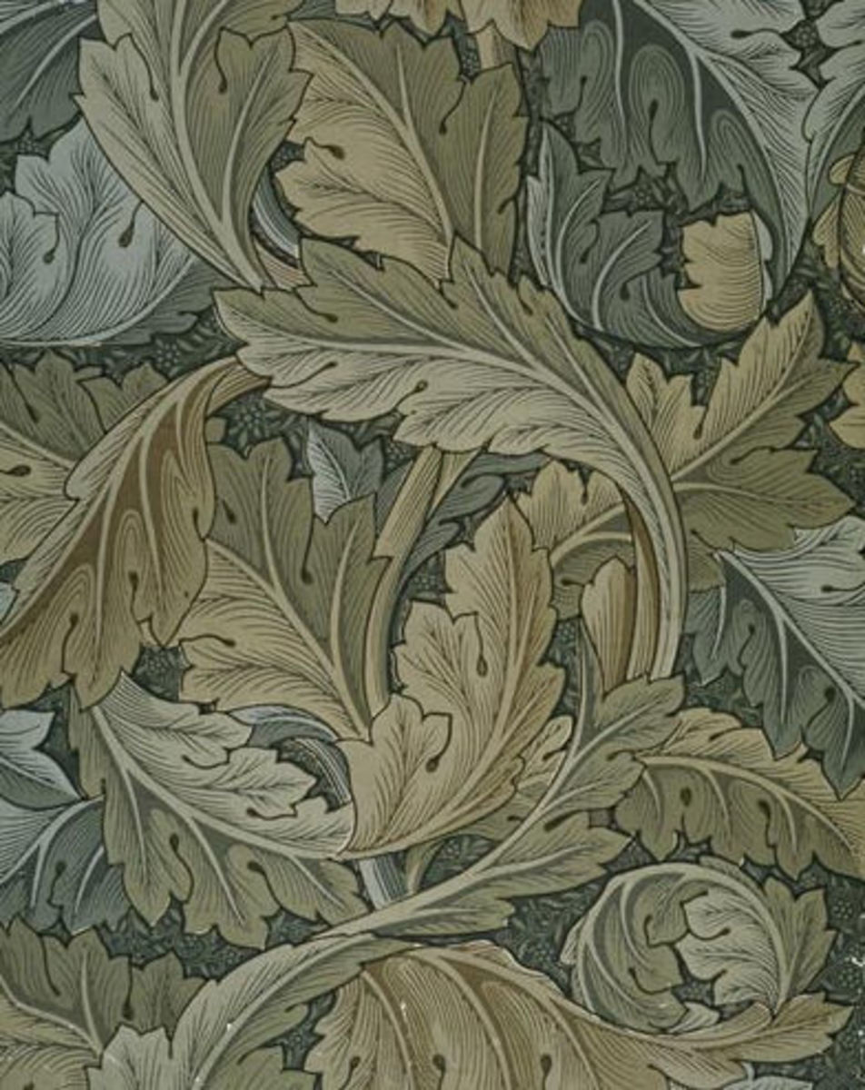 bears-breeches-oyster-plant-or-acanthus-mollis