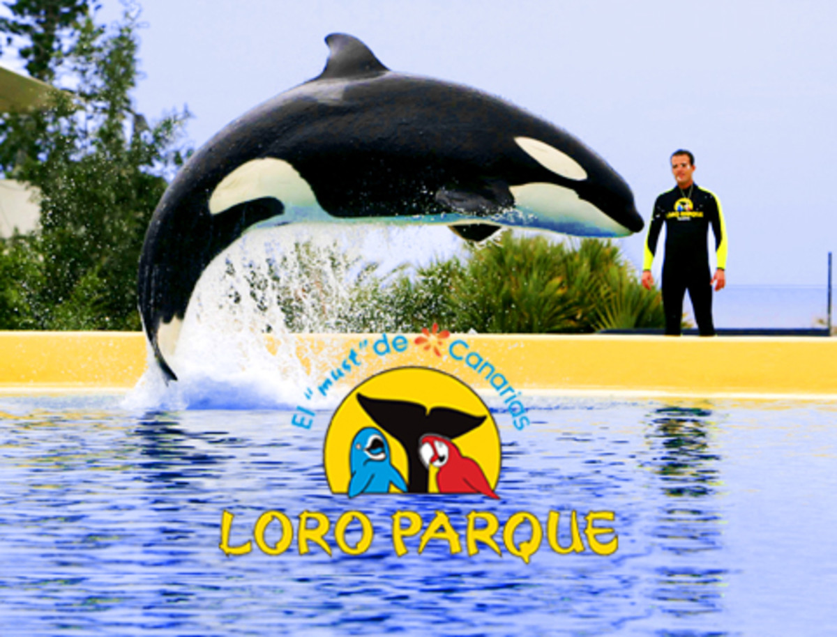 tilikum-in-2015-are-we-any-closer-to-saving-the-orcas
