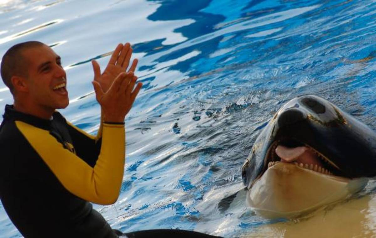 Alexis Martinez: Trainer at Loro Parque marine park, Canary Islands